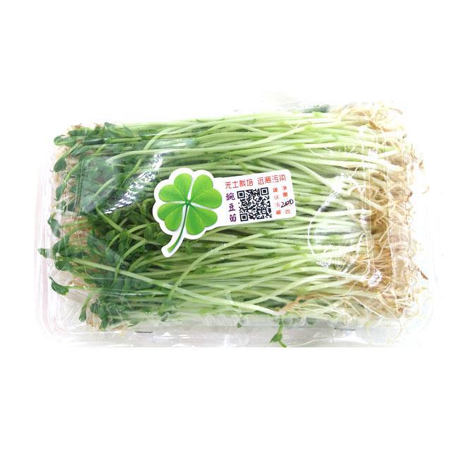 豌豆 芽苗菜200g