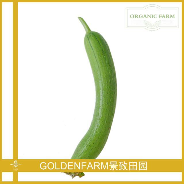 长丝瓜 400g [有机种植]