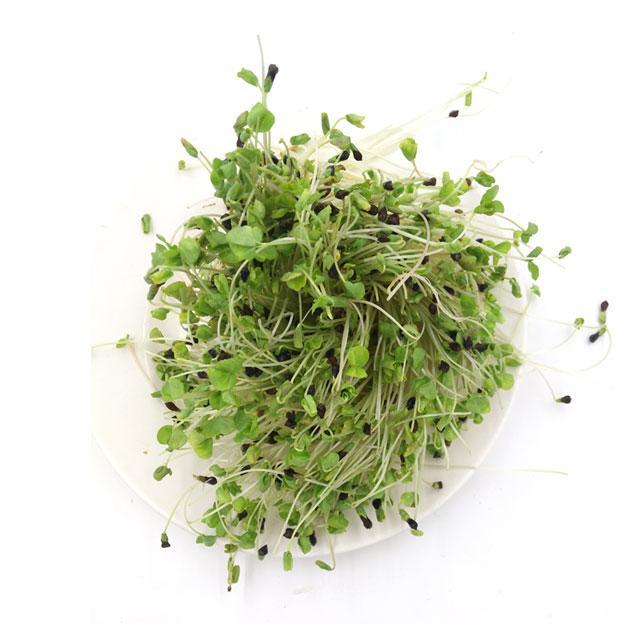 荞麦苗 芽苗菜250g