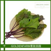 叶甜菜 300g[有机方式种植]
