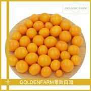小黄番茄 500g [有机方式种植]