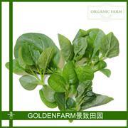 木耳菜 300g [有机方式种植]