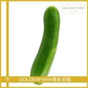 水果黄瓜 500g [有机种植]