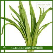 油麦菜 300g [有机方式种植]
