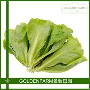 生菜 300g [有机方式种植]