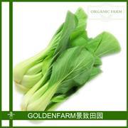 白梗鸡毛菜 300g [有机方式种植]