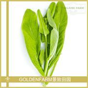 白菜苔 300g [有机种植]
