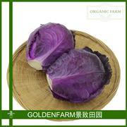 紫甘蓝 500g [有机方式种植]