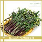 紫菜苔 500g [有机种植]