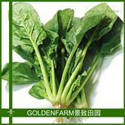 菠菜 300g [有机种植]