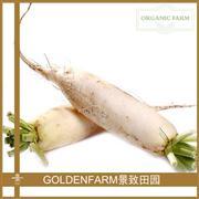 长白萝卜 400g [有机种植]