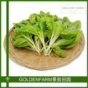黄芽菜 300g [有机方式种植]